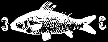 bourbon-fish-f